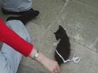 mijn lieve kat/my sweetest cat