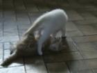 bataille de chatons Sandra et Sandrine au quotidien