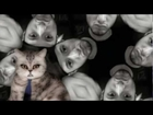 Cat Daddy Antonyo latest hit! Must see!